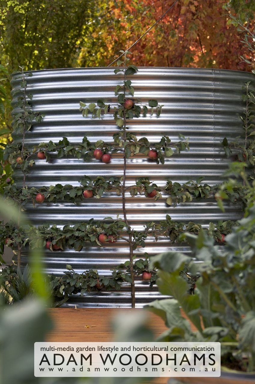 Rainwater tank design ideas get inspired by photos of rainwater - Cool Way To Espalier An Apple Tree Hide Your Rainwater Tank