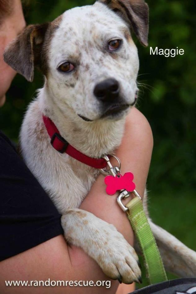 Maggie (VT)