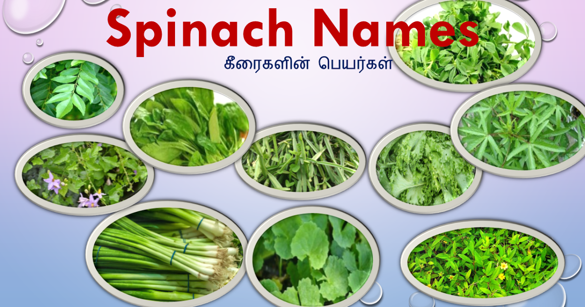 25 Spinach Names In Tamil And English Spinach Greens Names