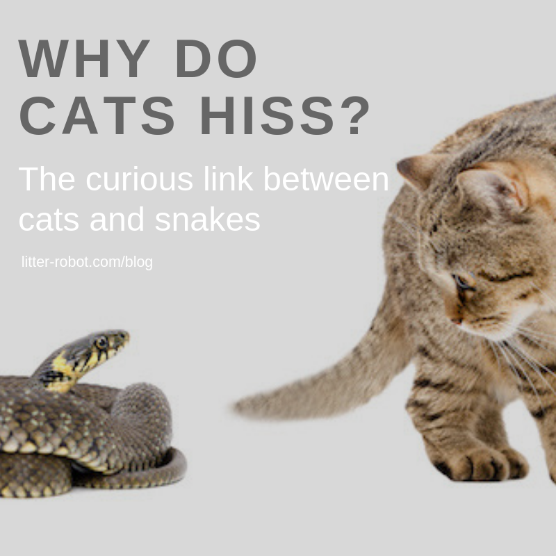 Why Do Cats Hiss? The Curious Link Between Cats and Snakes