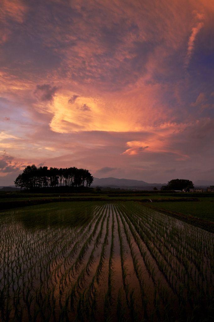 Sunset in rice field, Hachimantai, Iwate, Japan