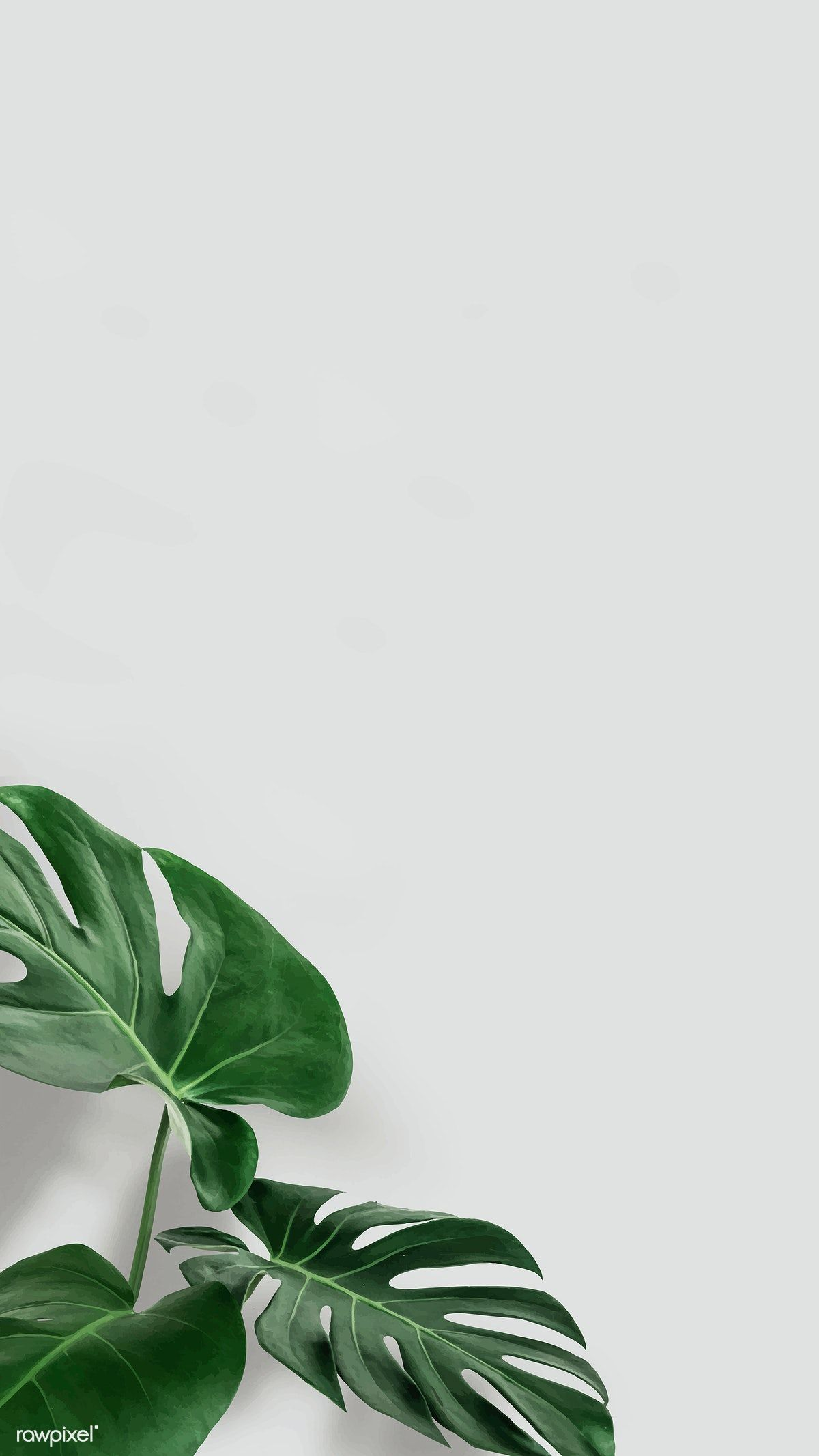 Download premium vector of Green monstera leaves with copy space vector by Nunny about aesthetic, android wallpaper, background design, background image, and background images 2270627