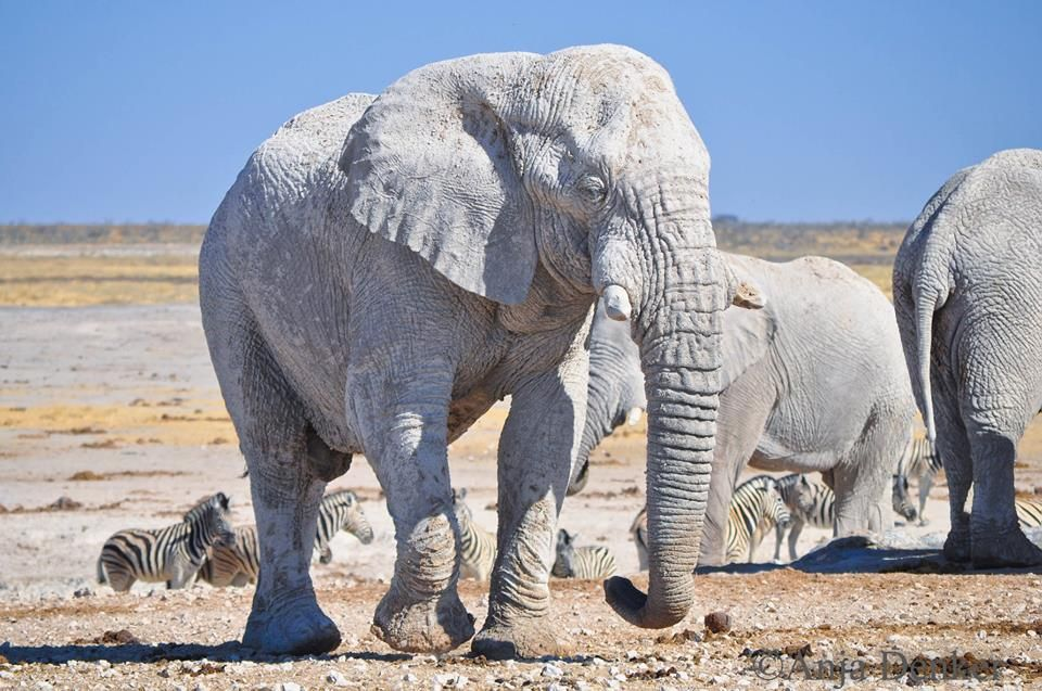 Pin On Love For Elephants