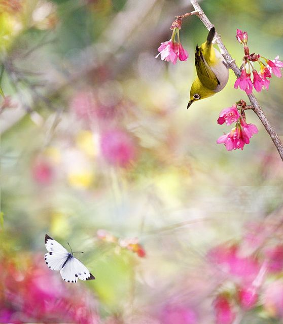 #855 小綠凝蝶 | Flickr - Photo Sharing!