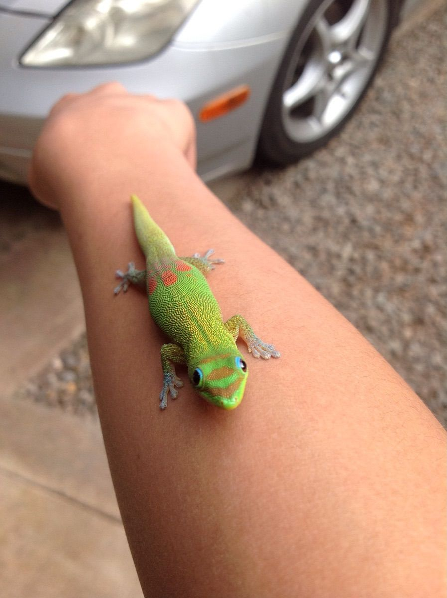 I Live In Hawaii And Think Found Geico