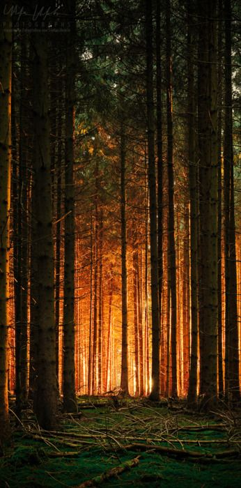 Sunset forest. my favorite