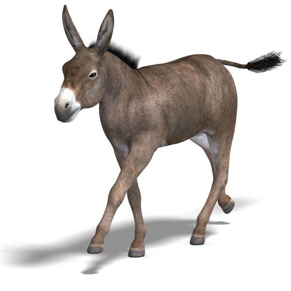 mule - Google Search | Moscow Mule | Pinterest | Big night ...