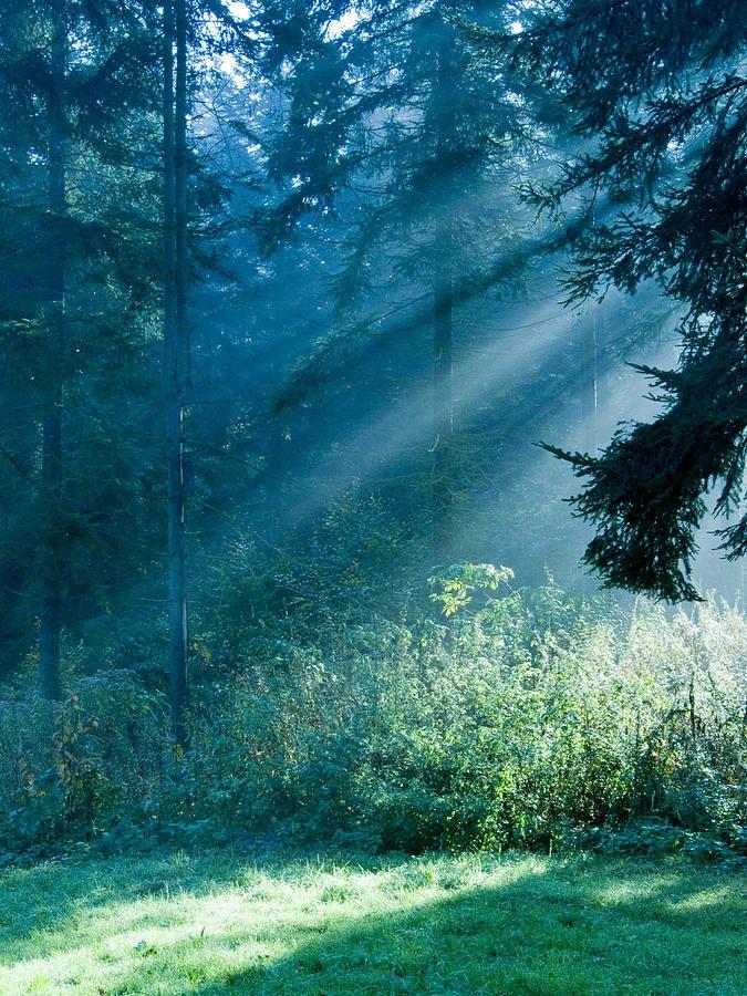 Elven Forest by Daniel Csoka