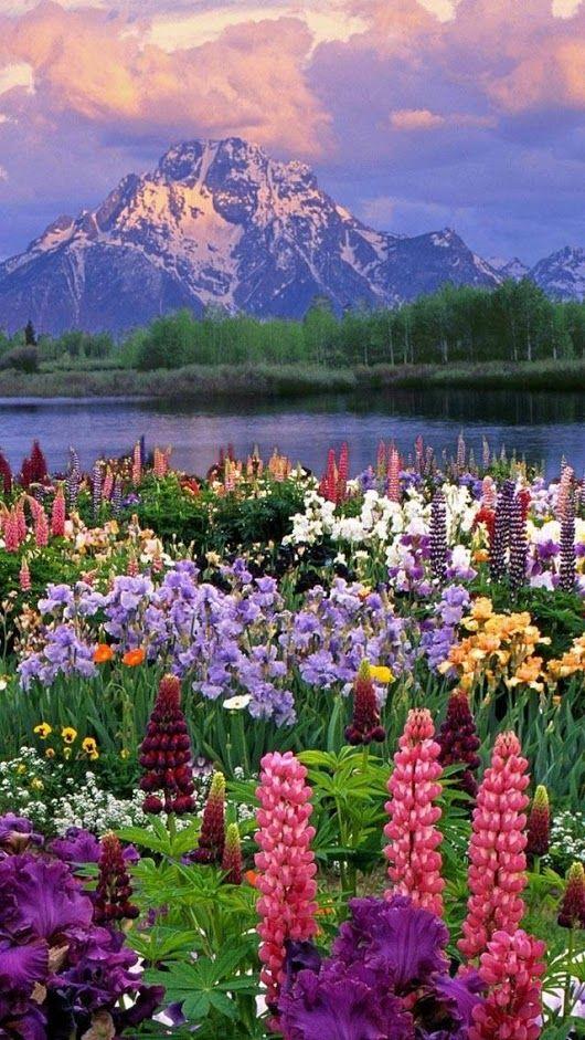 MONTE MORAN Es una montaña situada en el parque nacional