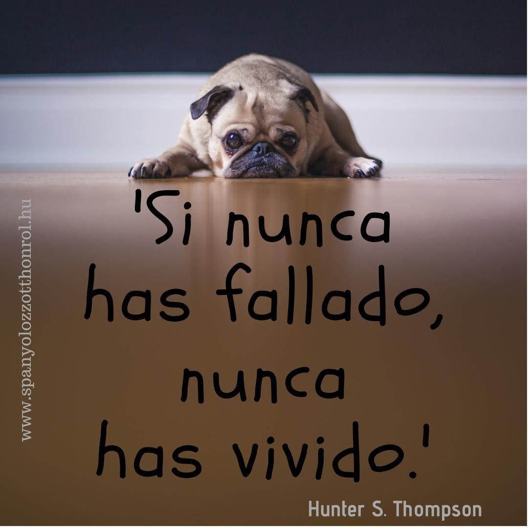 szerelmes idézetek spanyolul Ha sosem hibáztál, sosem éltél. | Animals, Dogs