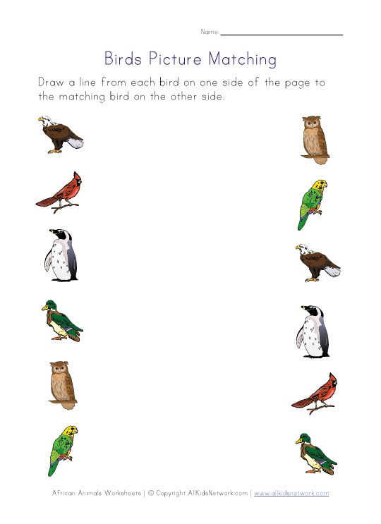 picture matching birds worksheet | KG Activities | Writing ...