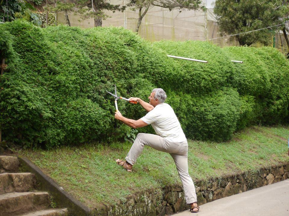 Живая изгородь в пейзажном стиле из Cupressus macrocarpa