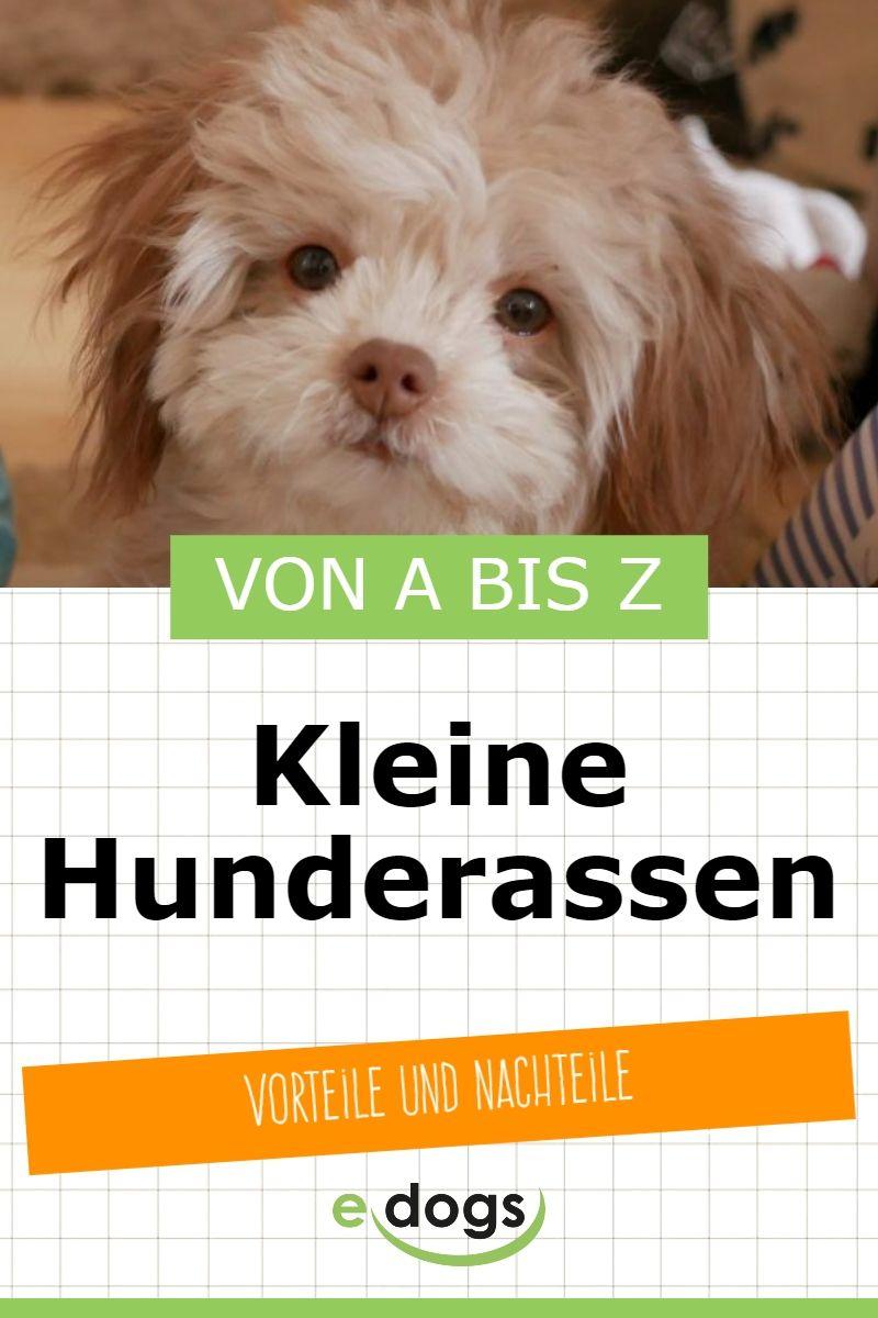 Kleine Hunderassen Von A Bis Z Hunderassen Hunde Rassen Kleine Hunderassen