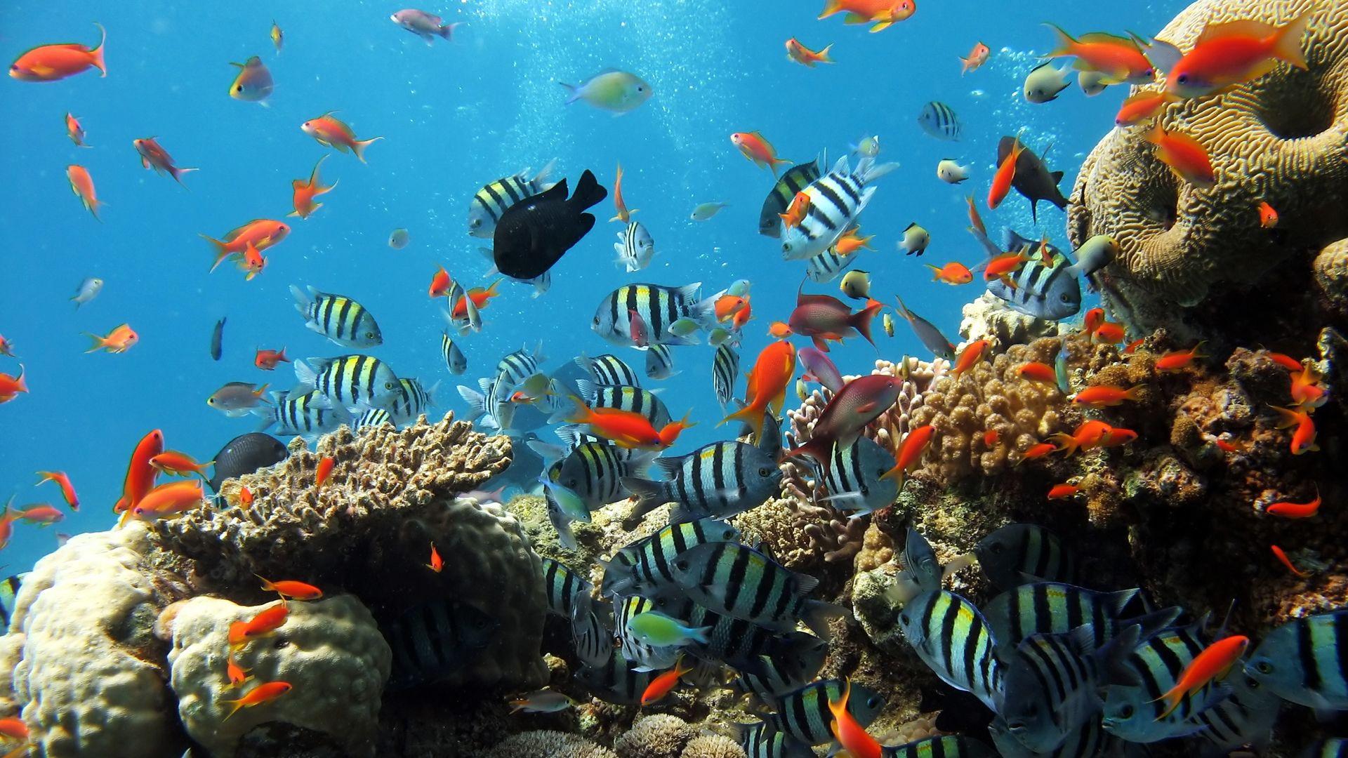 hd underwater widescreen desktop wallpapers underwater full hd wallpapers underwater pictures underwater