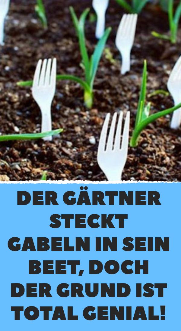 Der Gärtner steckt Gabeln in sein Beet, doch der Grund ist total genial! #veggiegardens