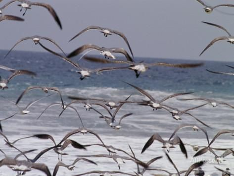 Seagulls Fly over Surf Photographic Print by Raul Touzon at AllPosters.com