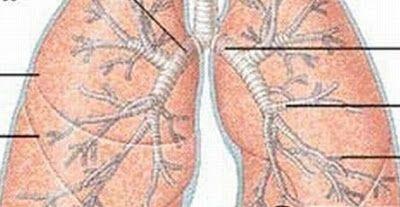 Prirodom do Zdravlja: Upala Pluća - Prirodno Liječenje