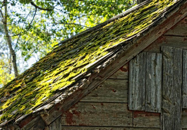 How To Remove Moss From The Roof Roof Cleaning Wood Shingles Roofing