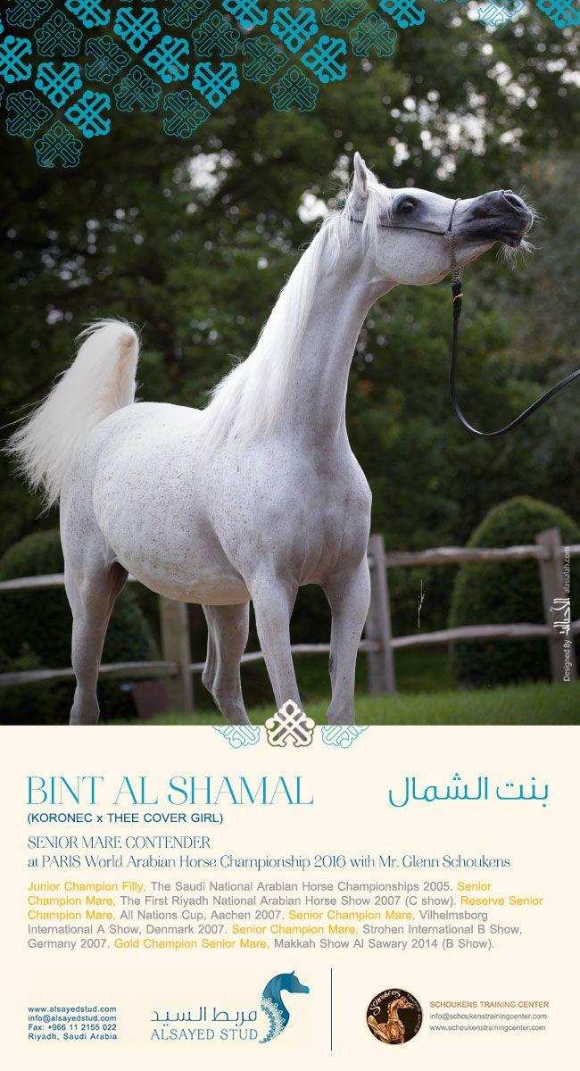 ستعشقها من النظرة الأولى بنت الشمال منافسة الأفراس باريس 2016 Beautiful Arabian Horses Arabian Horse Dressage Horses