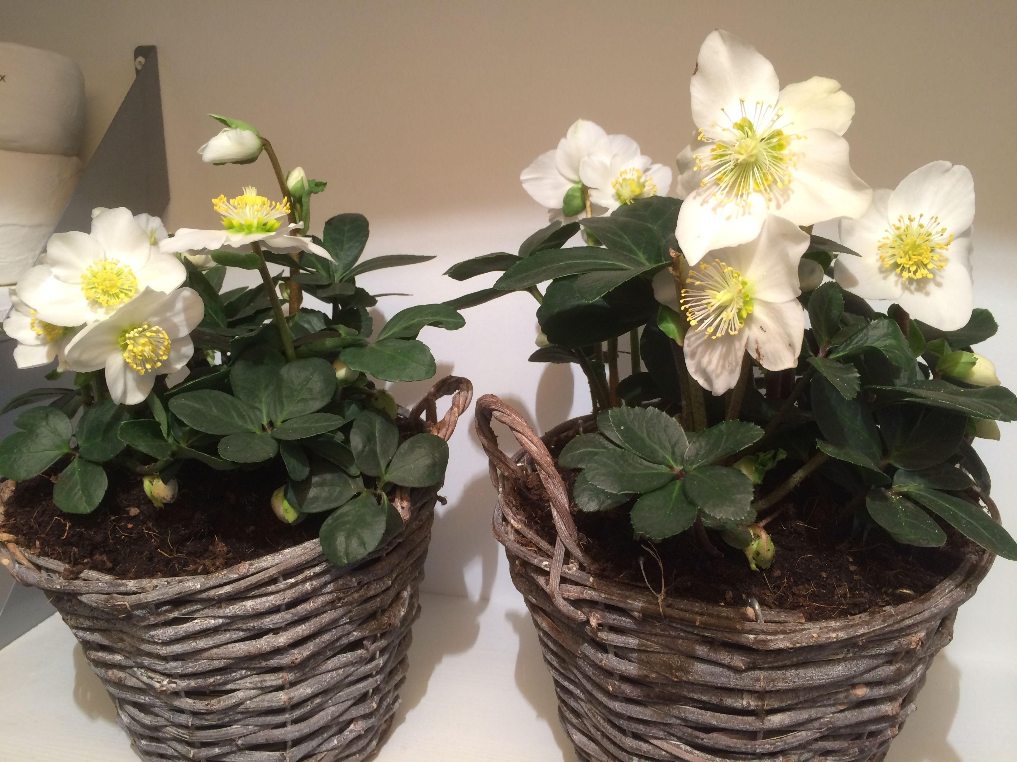 Arbre Fruitier En Pot Interieur plantes en pot d'intérieur : tentez l'originalité avec | pot