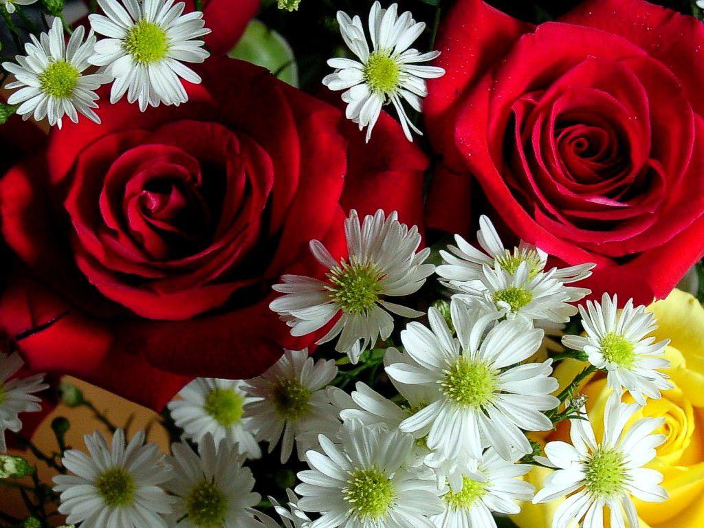 fiori - Cerca con Google | Idee per la casa | Pinterest | Flowers ...