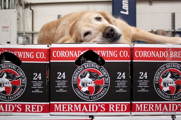 Coronado Brewing Company's brew dog taking a nap on top of Mermaid's Red.