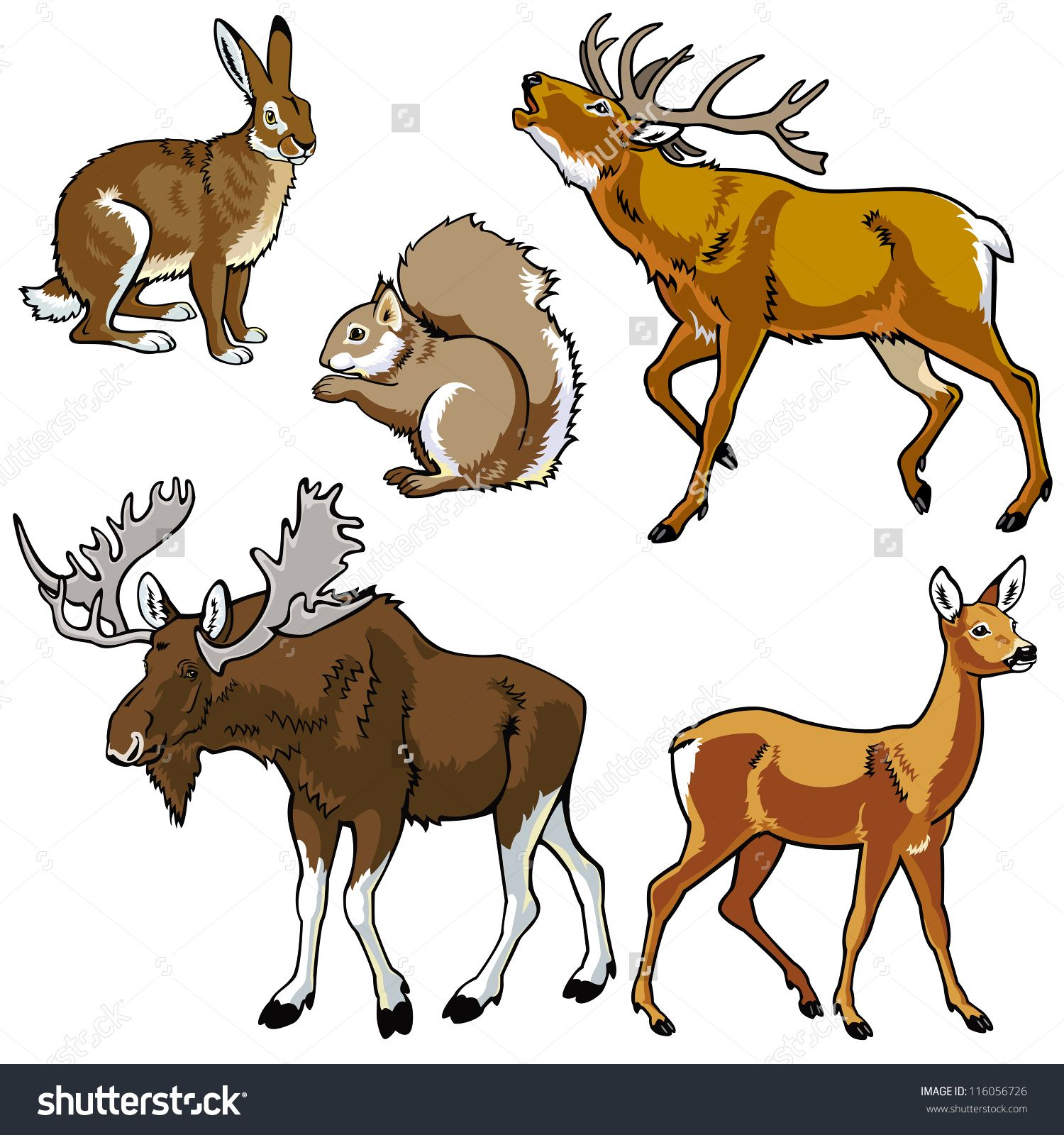 jungle animals serius illustrations Google Search