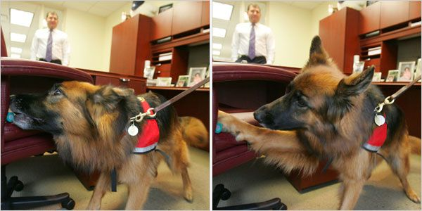 Since Friday Is Take Your Dog To Work Day, We Took A Look At Recent ·  Recent NewsBed BugsYour ...