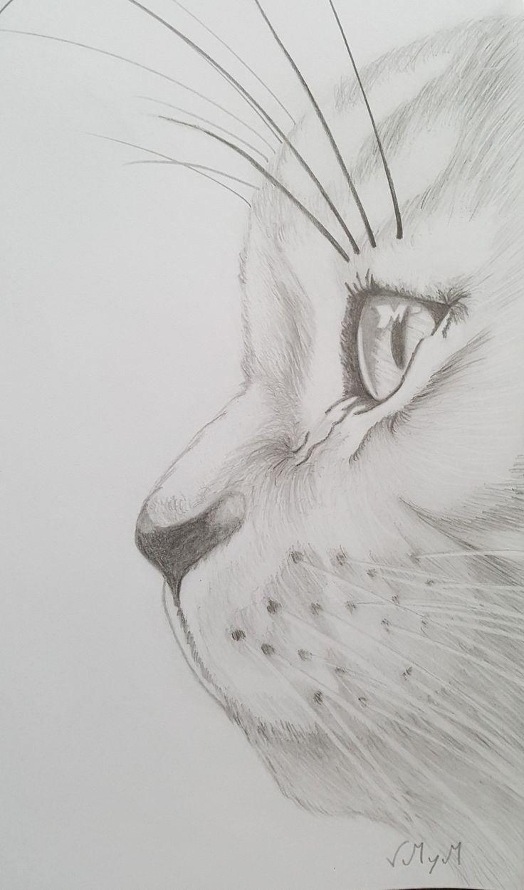 illustrationen tiere realisticeye illustrationen tiere