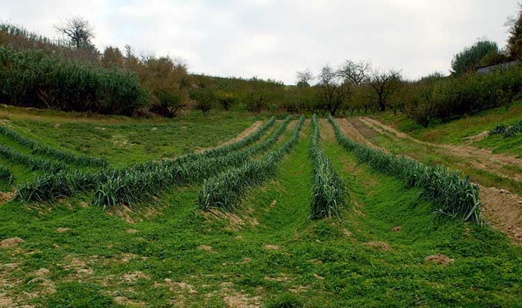 Leeks Everything You Need To Know To Grow And Harvest