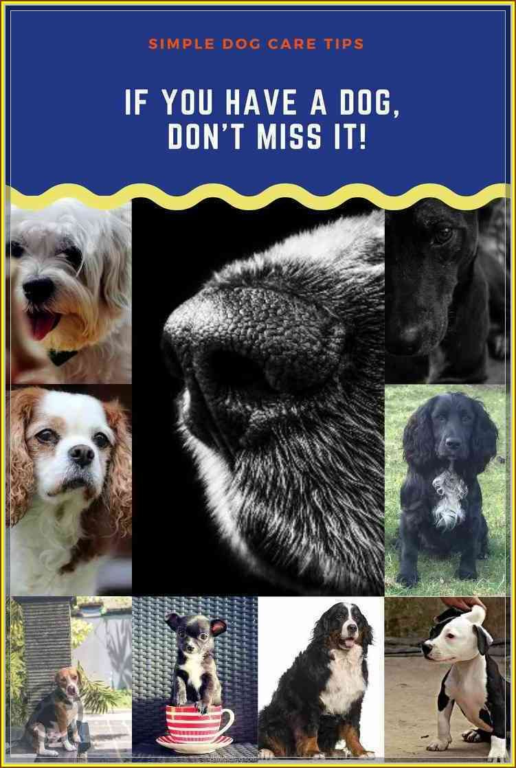 Stop The Headaches, Learn More About Dog Care Dog care
