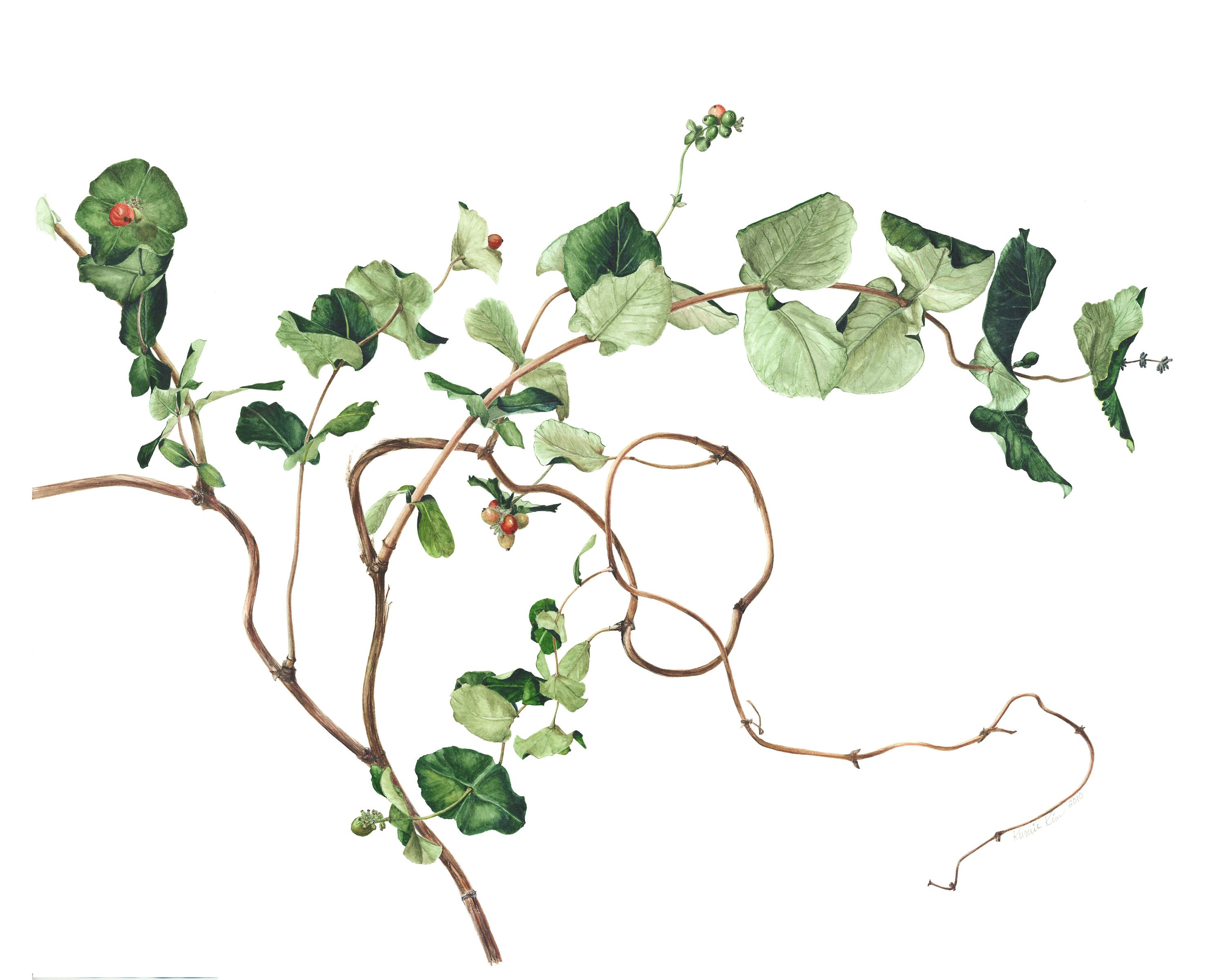 Money Plant Watercolor Painting