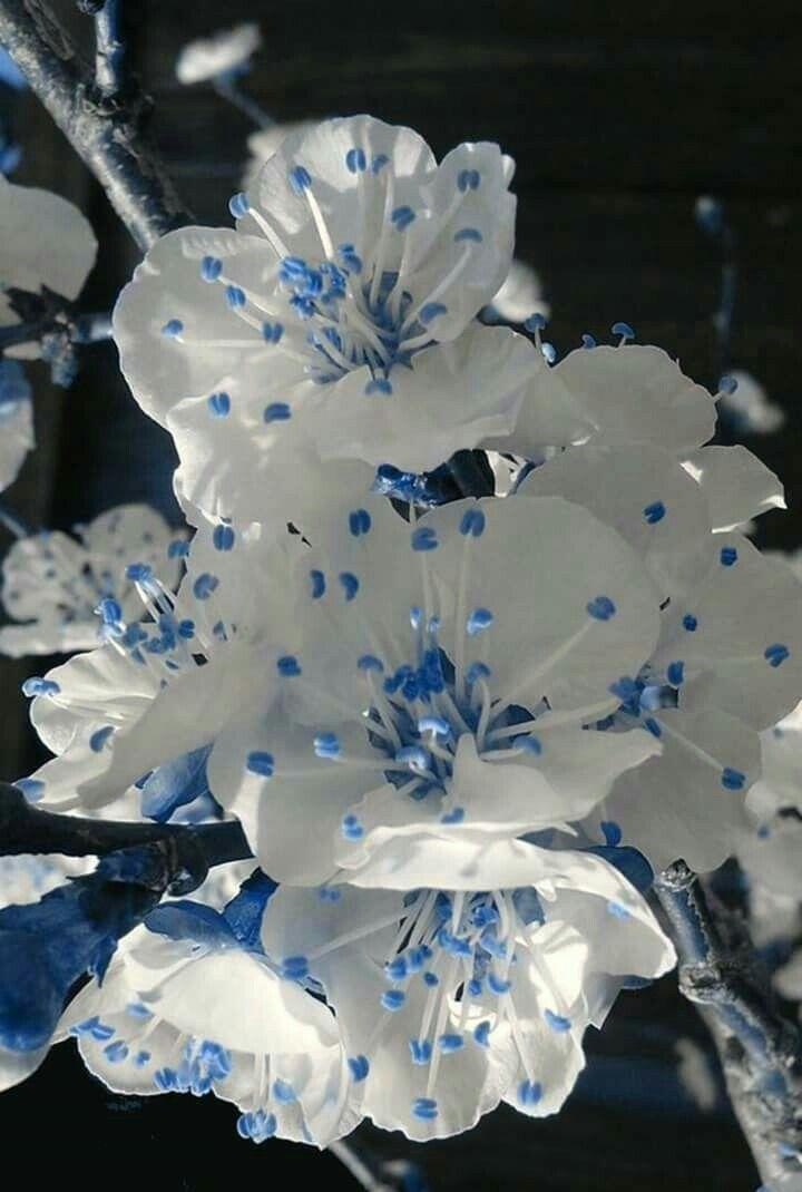 Fiori Blu E Bianchi.Pin Di Mariantonietta Contieri Su Piante E Fiori Fiori