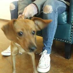 Austin Animal Center In Austin Texas In 2020 Pet Adoption Dachshund Adoption Dog Adoption