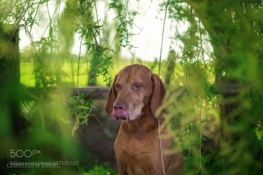 Ace by Christoph-Eberl