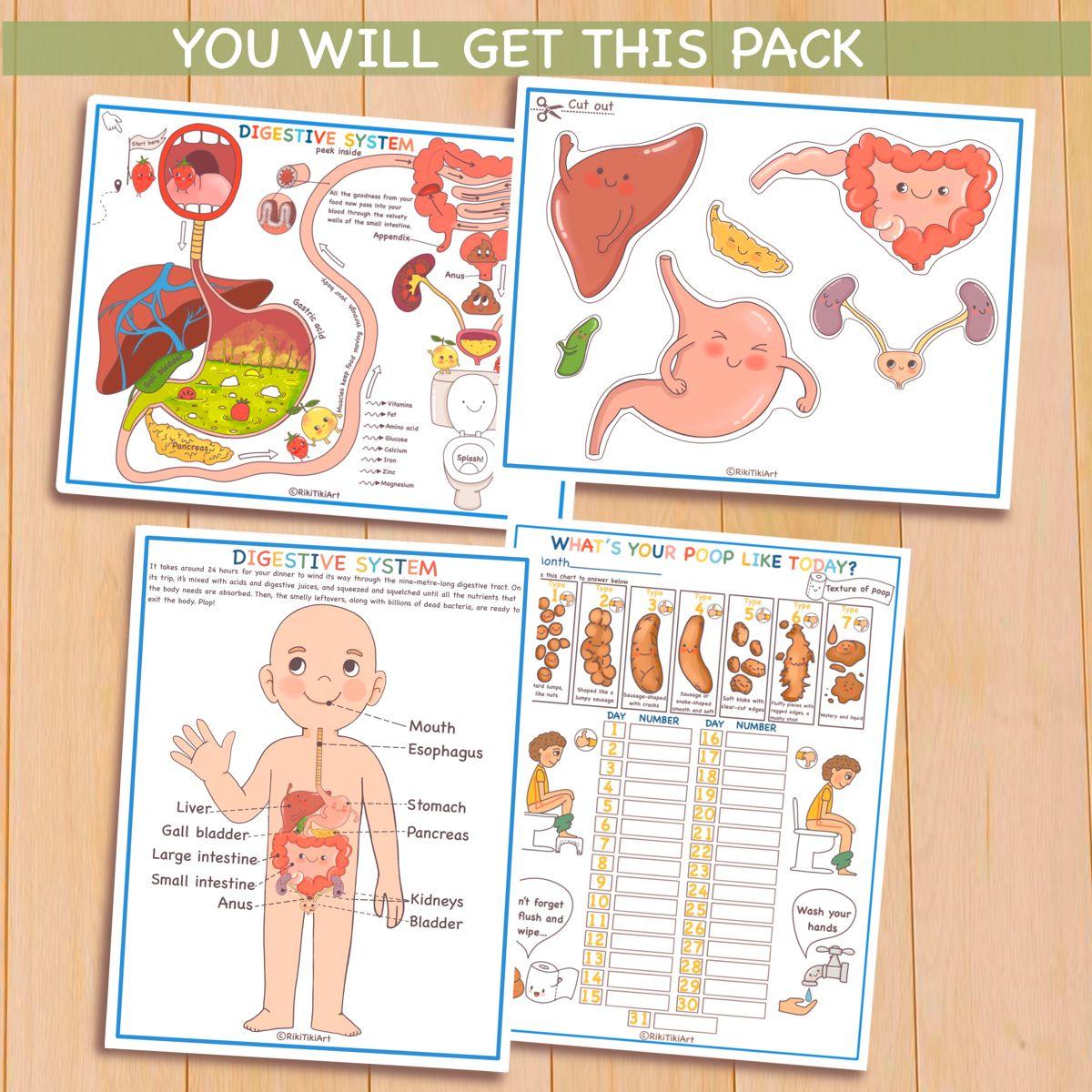 Human Digestive System Anatomy Bundle About Me Homeschool Curriculum Preschool Printable Toddler Activities Kids Calendar Homeschooling Materials Homeschool Learning [ 1200 x 1200 Pixel ]