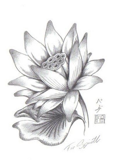 Lotus Flower Drawings For Tattoos
