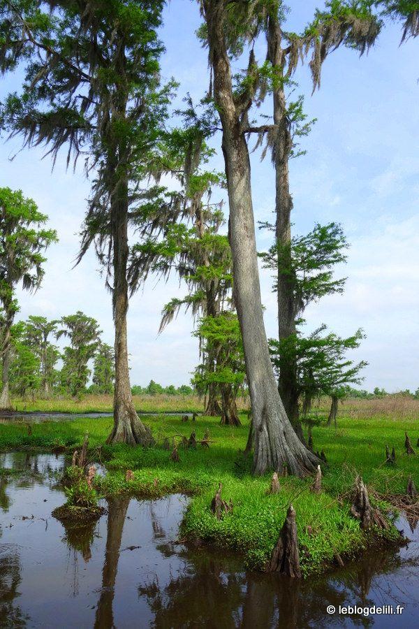 Le Sud de la Louisiane