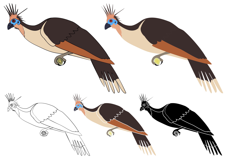 Tacha bird in profile view em 2020 Gráfico animais