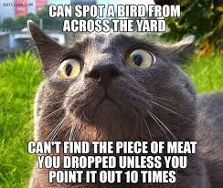 when it says meat is it talking about the bird or like a steak?