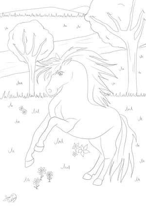 Malvorlage Pferd Wasser | Adult Coloring Pages: Horses | Pinterest
