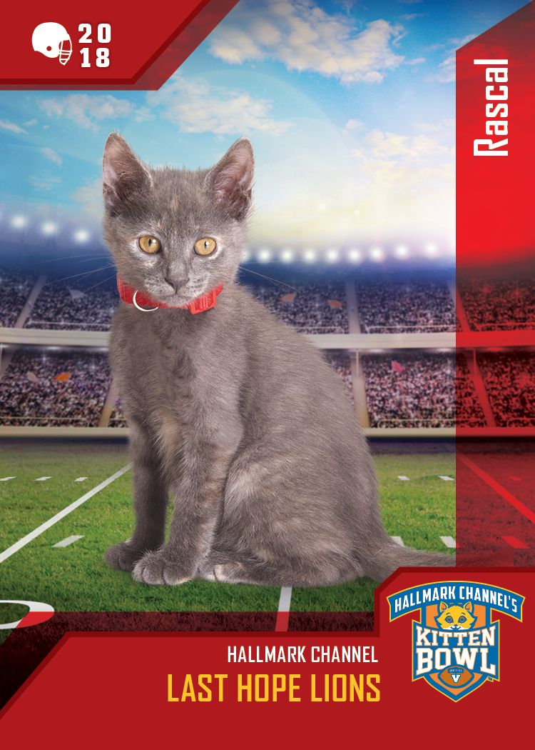 Flashcatfriday Rascal Was One Of Our Kitten Bowl V Catletes As Wide Furrceiver Rascal Made Plays And Captured The Ball Kitten Bowls Hallmark Channel Kitten