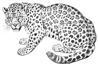 Jungle Coloring Pages | Jungle coloring pages, Cat ...