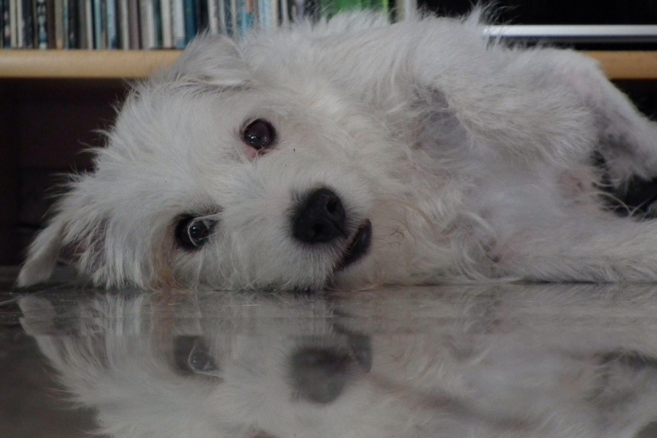 Lieve luie hond