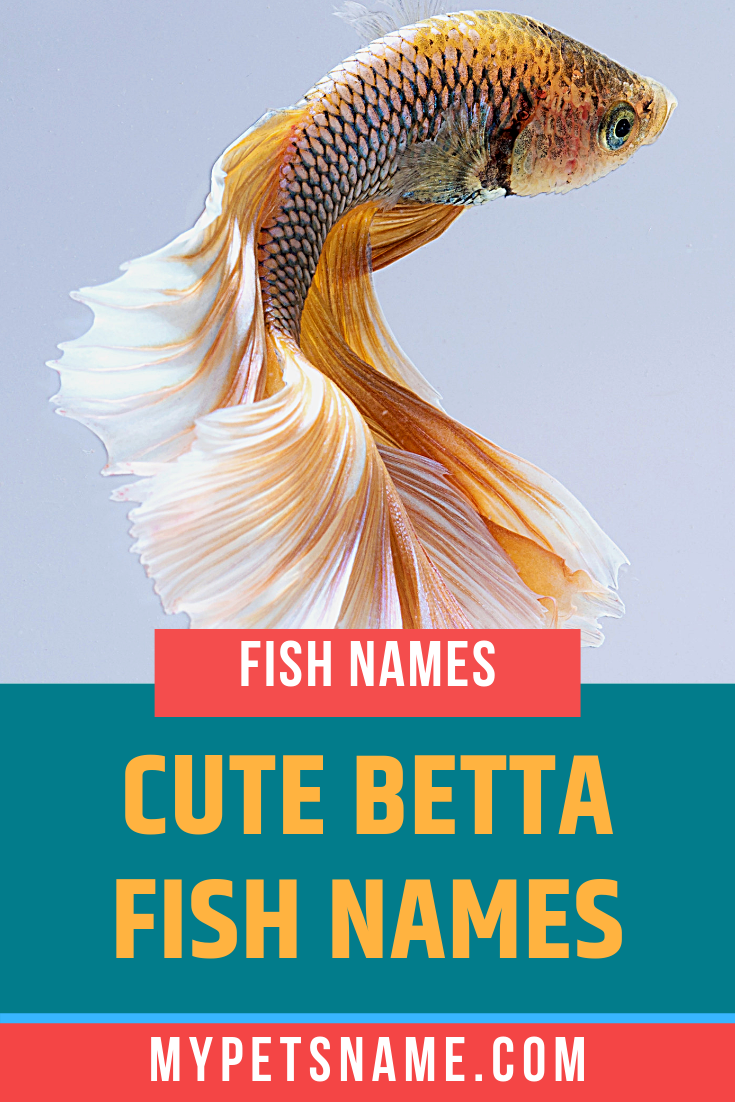 Our List Of Cute Betta Fish Names Range In Their Uniqueness However One Thing They All Have In Common Is That They Have A M Betta Fish Betta Fish Types Betta
