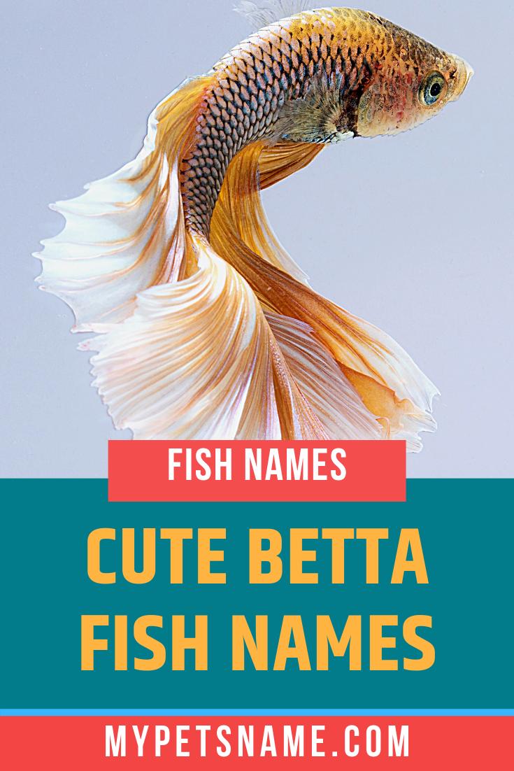 Cute Betta Fish Names Betta Fish Cute Pet Names Baby Betta Fish