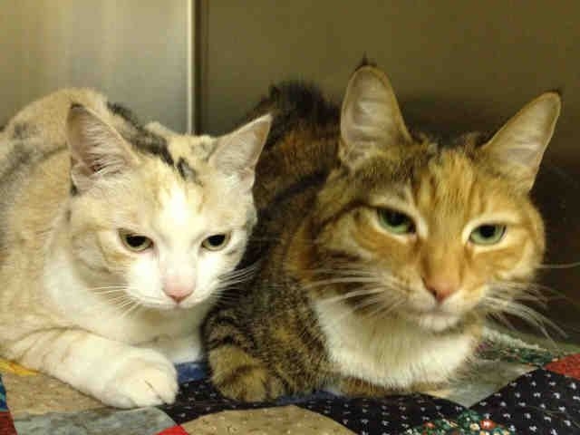 August 8 Is World Cat Day From August 8 15 You Can Adopt Two Cats For The Price Of One At Any Toronto Anim Cat Adoption World Cat Day Animal Shelter