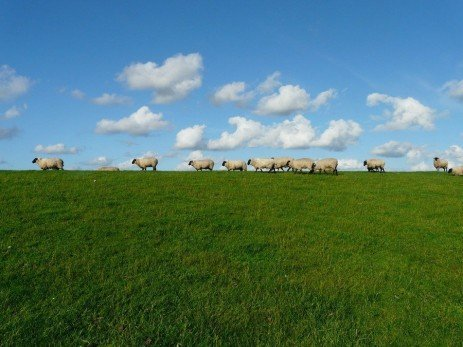 Feeding the Flock in 2020 Landscape, Sky and clouds