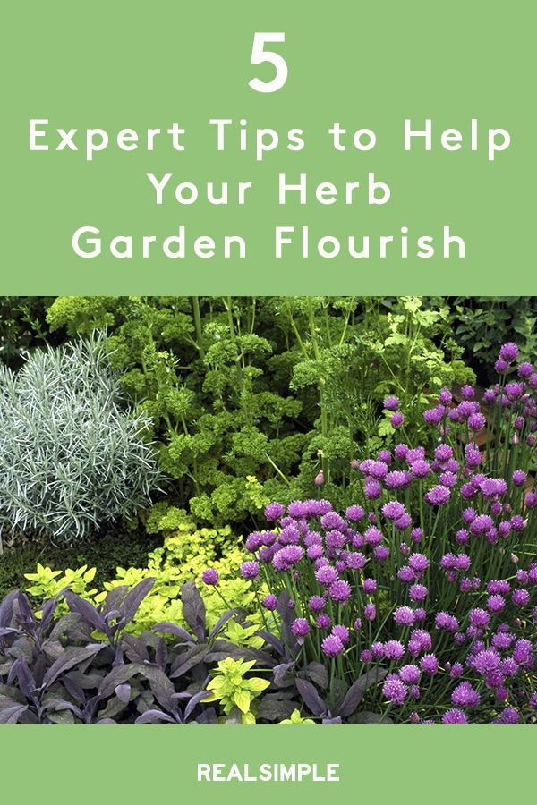 5 Tips to Keep Your Herb Garden Alive is part of Herb garden pallet, Herb garden, Vegetable garden design, Herbs, Medicinal plants, Garden - Use these expert tips to help your herb garden flourish