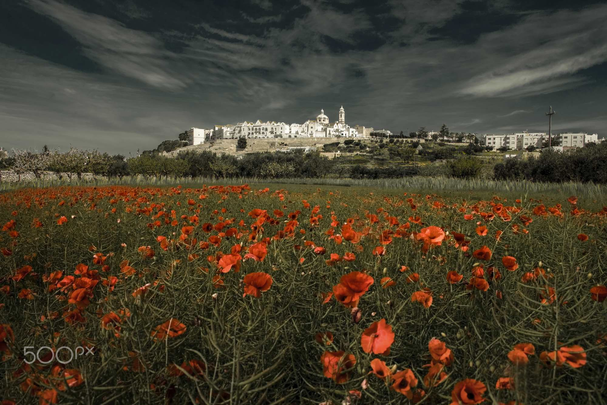 And 'the time of the poppies - You can find me on       <a…